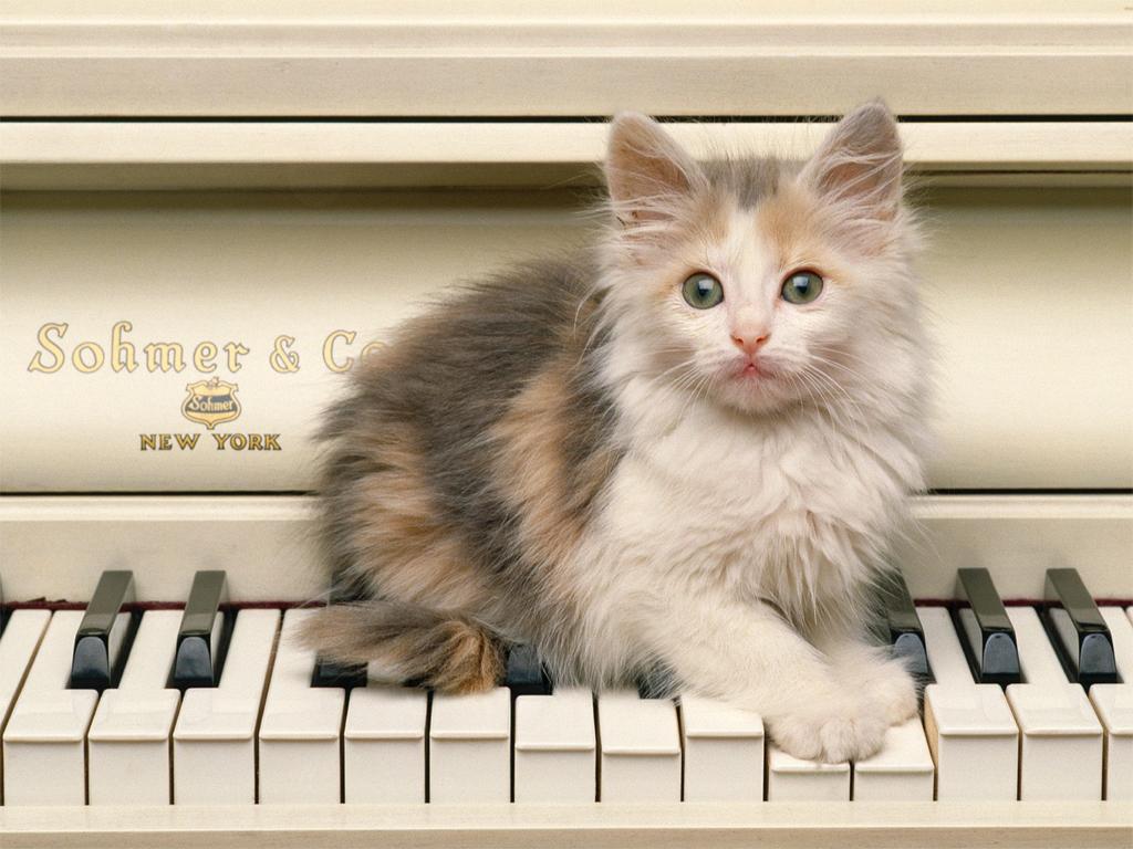 Desktop Wallpaper for Cat Lovers Pictures of Cats Cat Pictures 1024x768