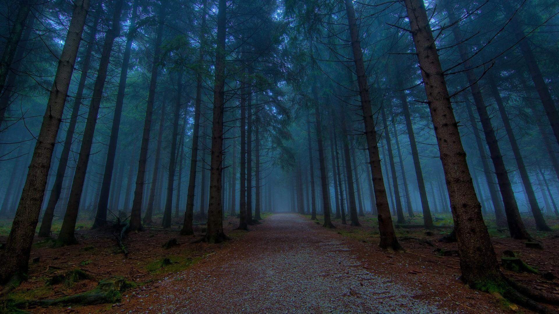 Download dark woods HD wallpaper 1920x1080