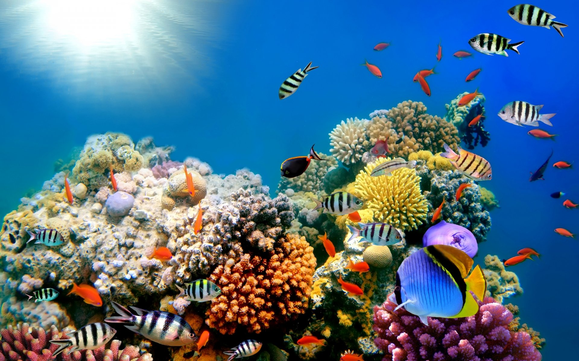 Ocean Coral Desktop Backgrounds chillcovercom Underwater Ocean 1920x1200