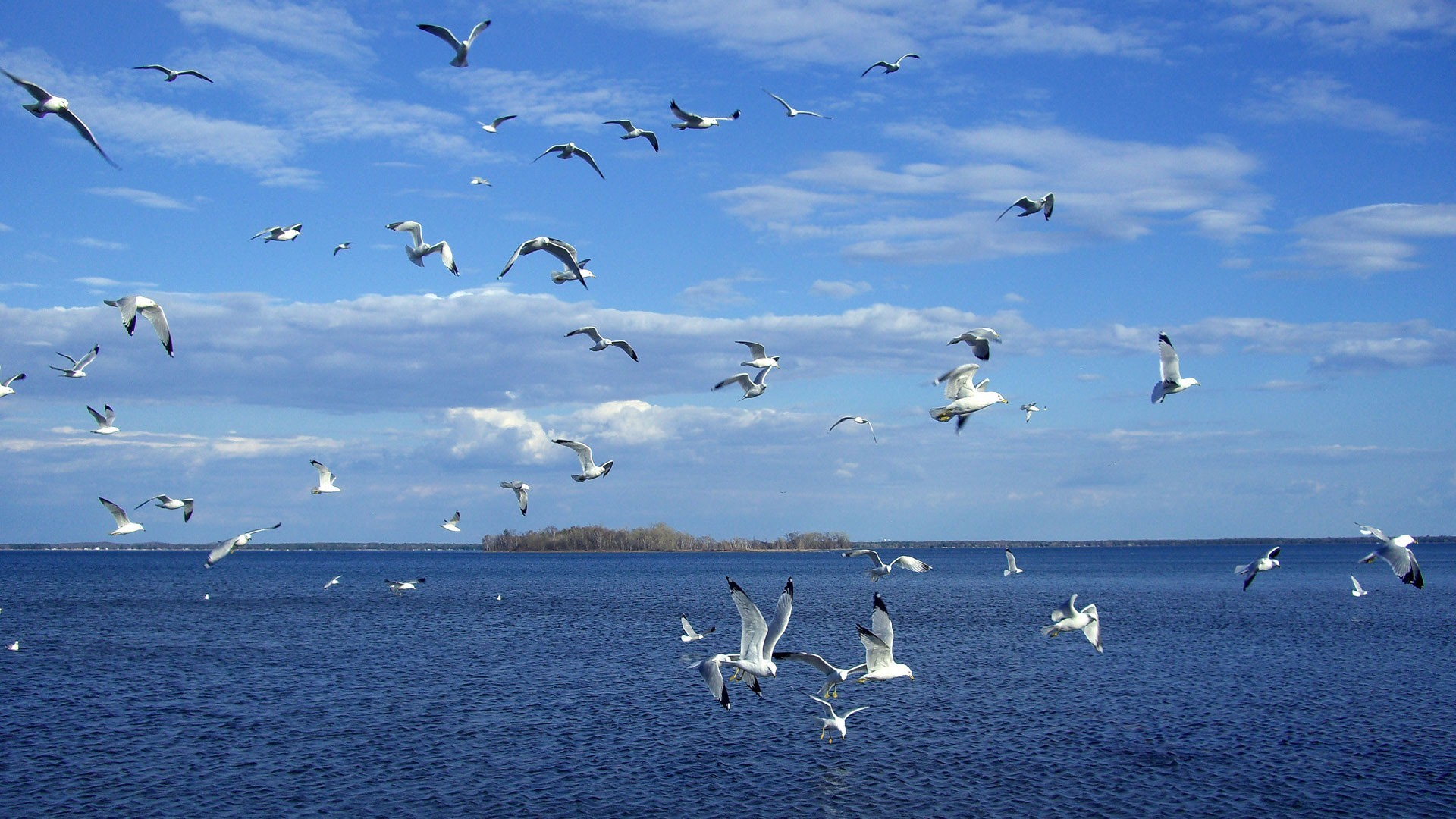 Pictures Images and Photos Birds On Blue Sea Hd Wallpaper Wallpapers 1920x1080
