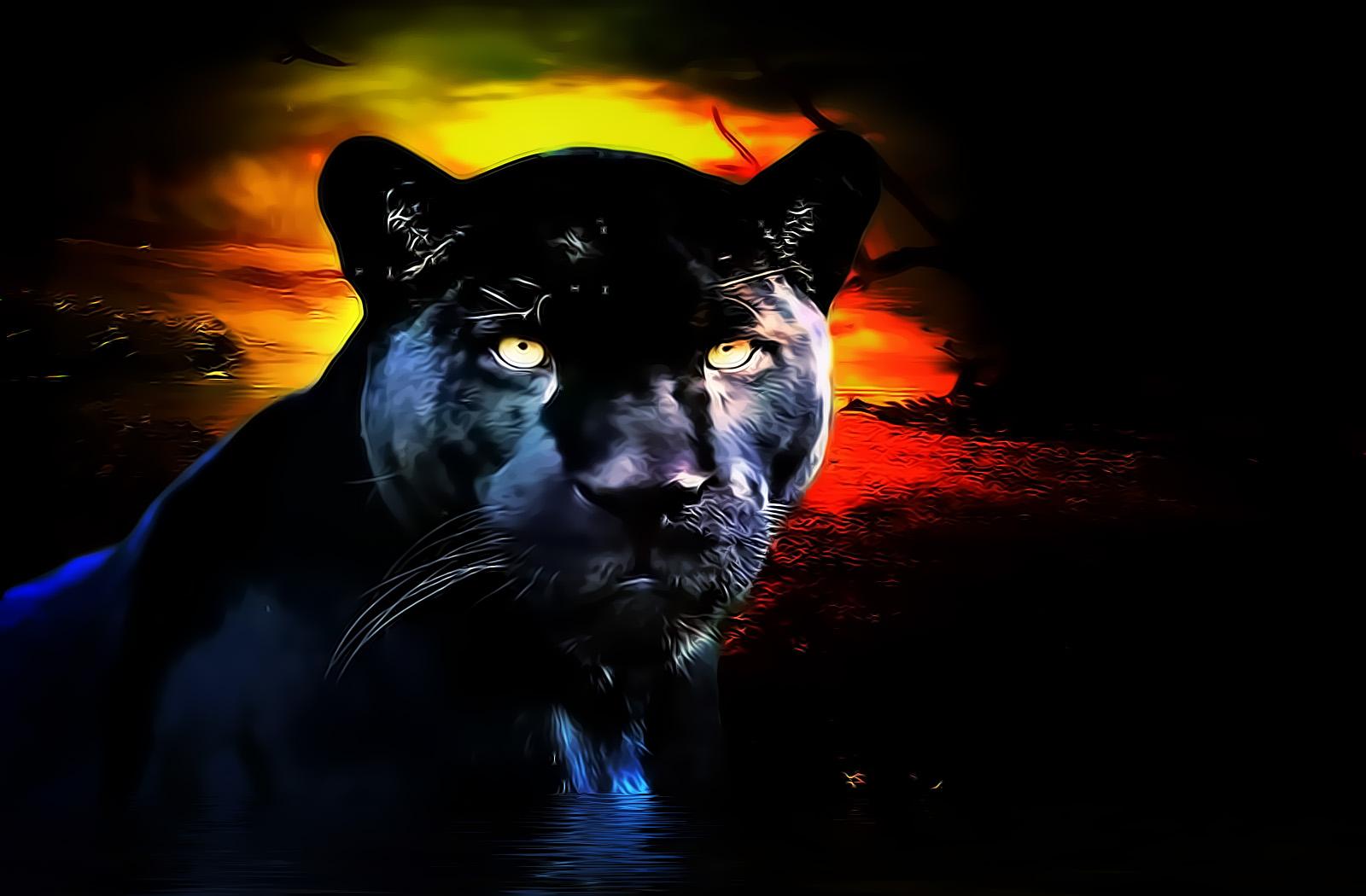 PANTHER cat panther wallpaper black animaljpg 1600x1050