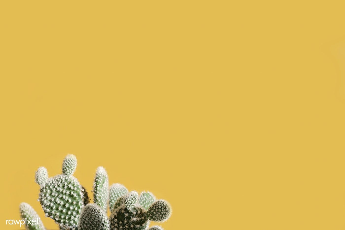 Cactus on a yellow background image by rawpixelcom Scott 1400x934