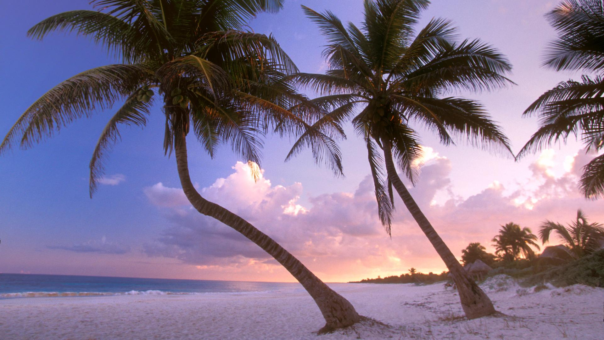 sultry background cool wallpapers mexico sways backgrounds 1920x1080