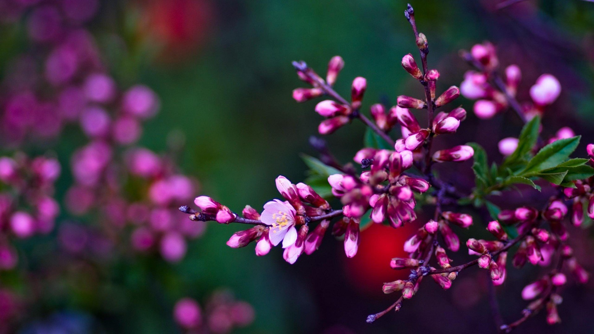 Spring Flowers Backgrounds HD 1920x1080