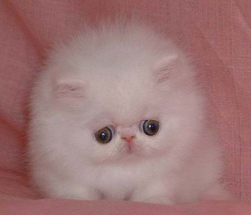 FileVery sad looking kittenjpg   Uncyclopedia the content free 500x428