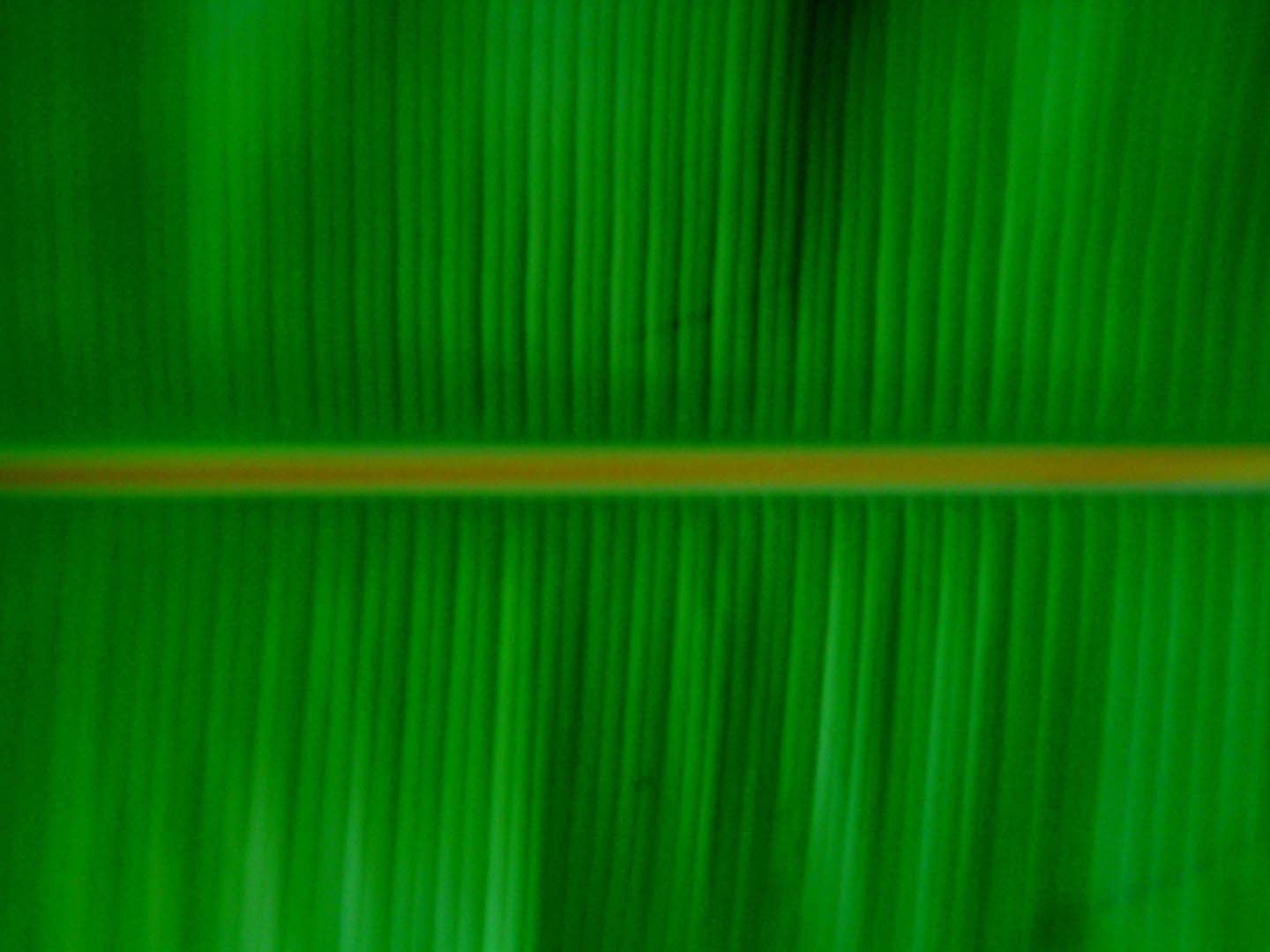Banana Leaf   Food And Drink Wallpaper Image featuring Fruit 1440x1080