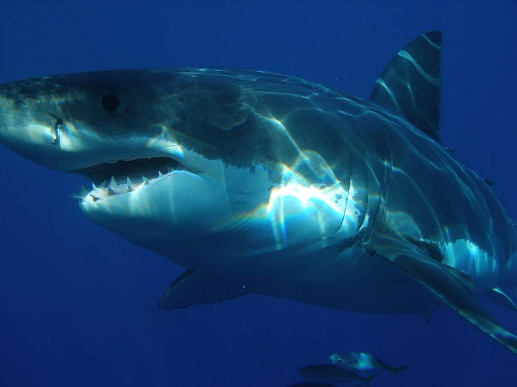 hd wallpaper Megalodon Shark Terrifying Sea Creature HD Wallpaper 1024x768