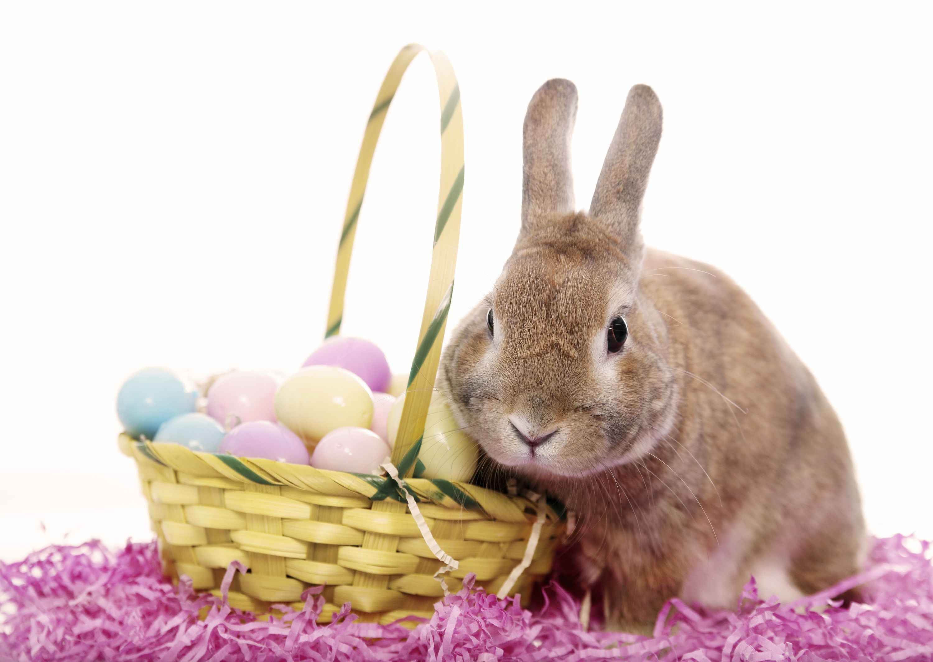 Easter Bunny Wish You Happy Easter Top quality wallpapers 3000x2128