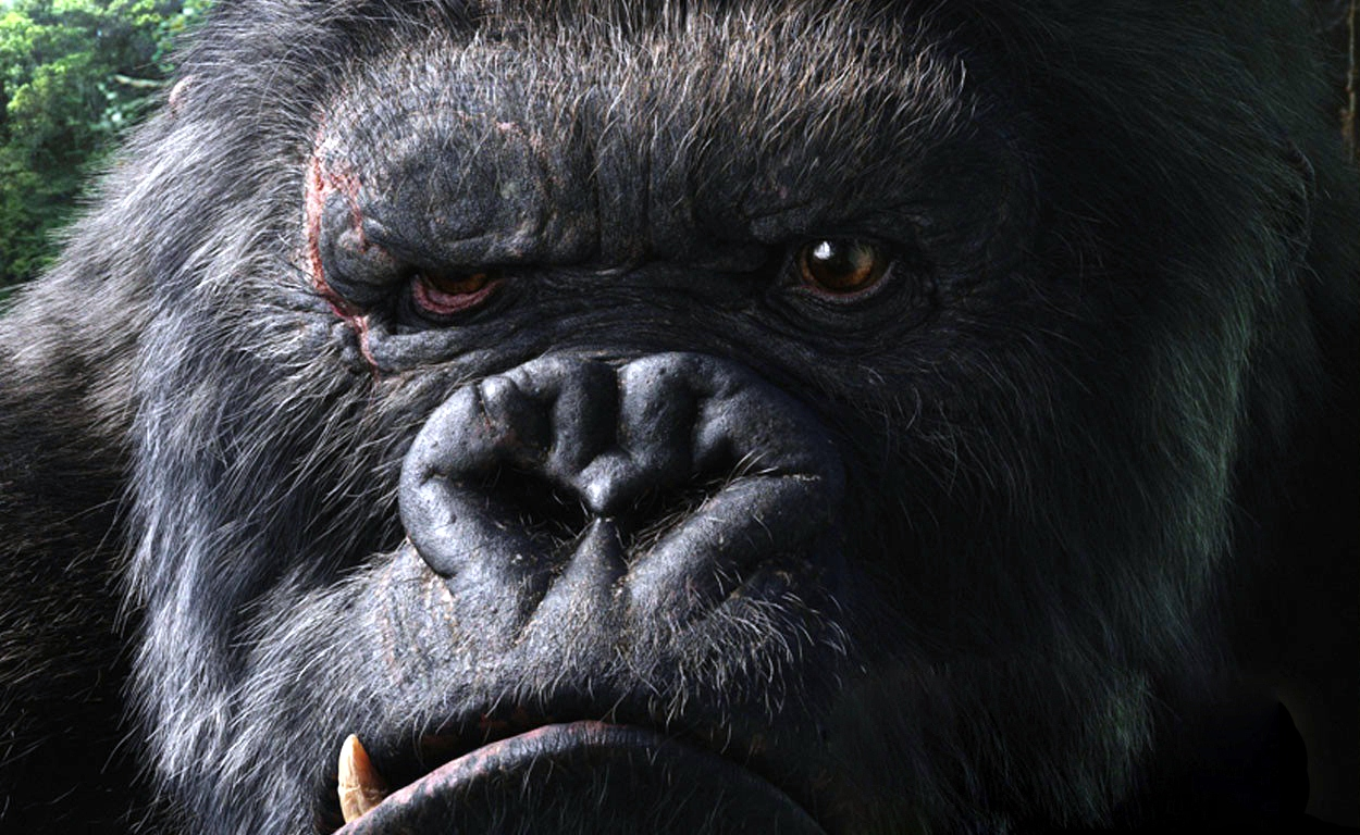 Free Download Gorilla Hd Wallpapers 1250x768 For Your