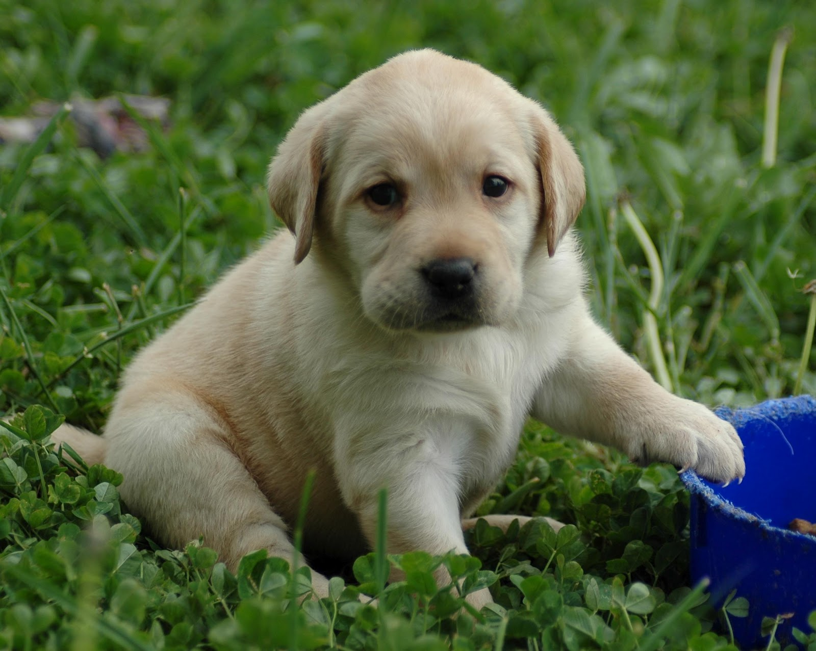 Cute Puppies Wallpapers   Very Cute Puppies Wallpapers 1600x1277