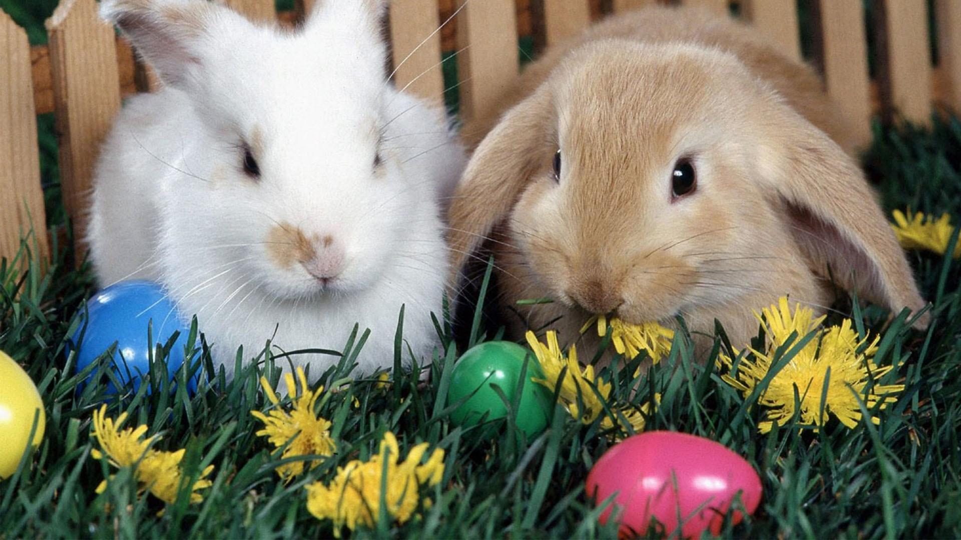 Easter Desktop Backgrounds HD Easter Images 1920x1080