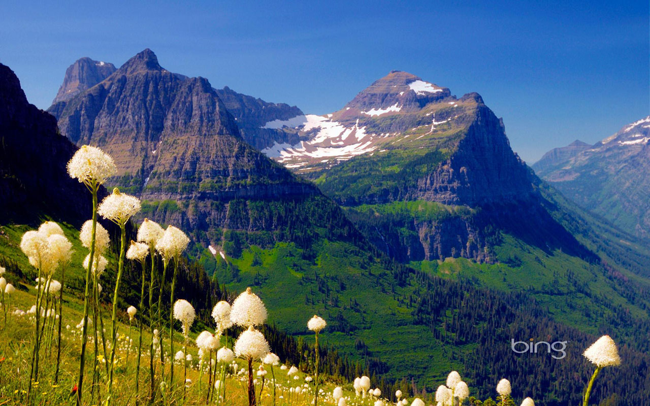 wallpapers bing theme of photography mountains white wildflowers bing 1280x800