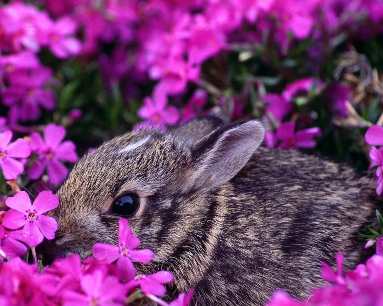 Красивое фото цветов и животных на