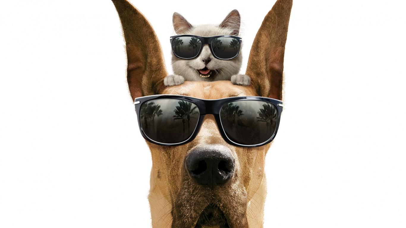 Cool Cat And Dog Wallpaper   1366x768 iWallHD   Wallpaper HD 1366x768