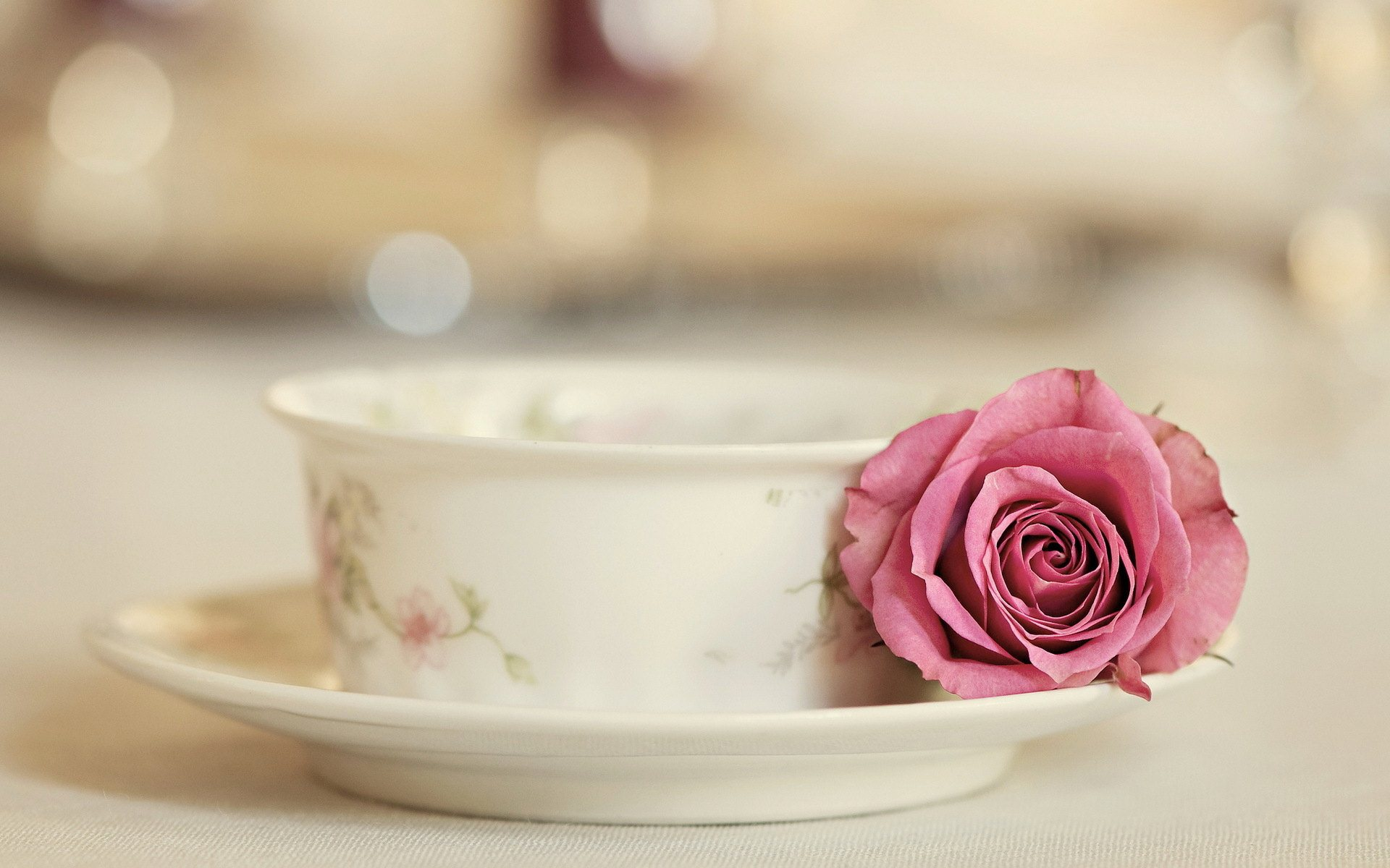 Rose with Tea Cup Widescreen HD Wallpaper 1920x1200