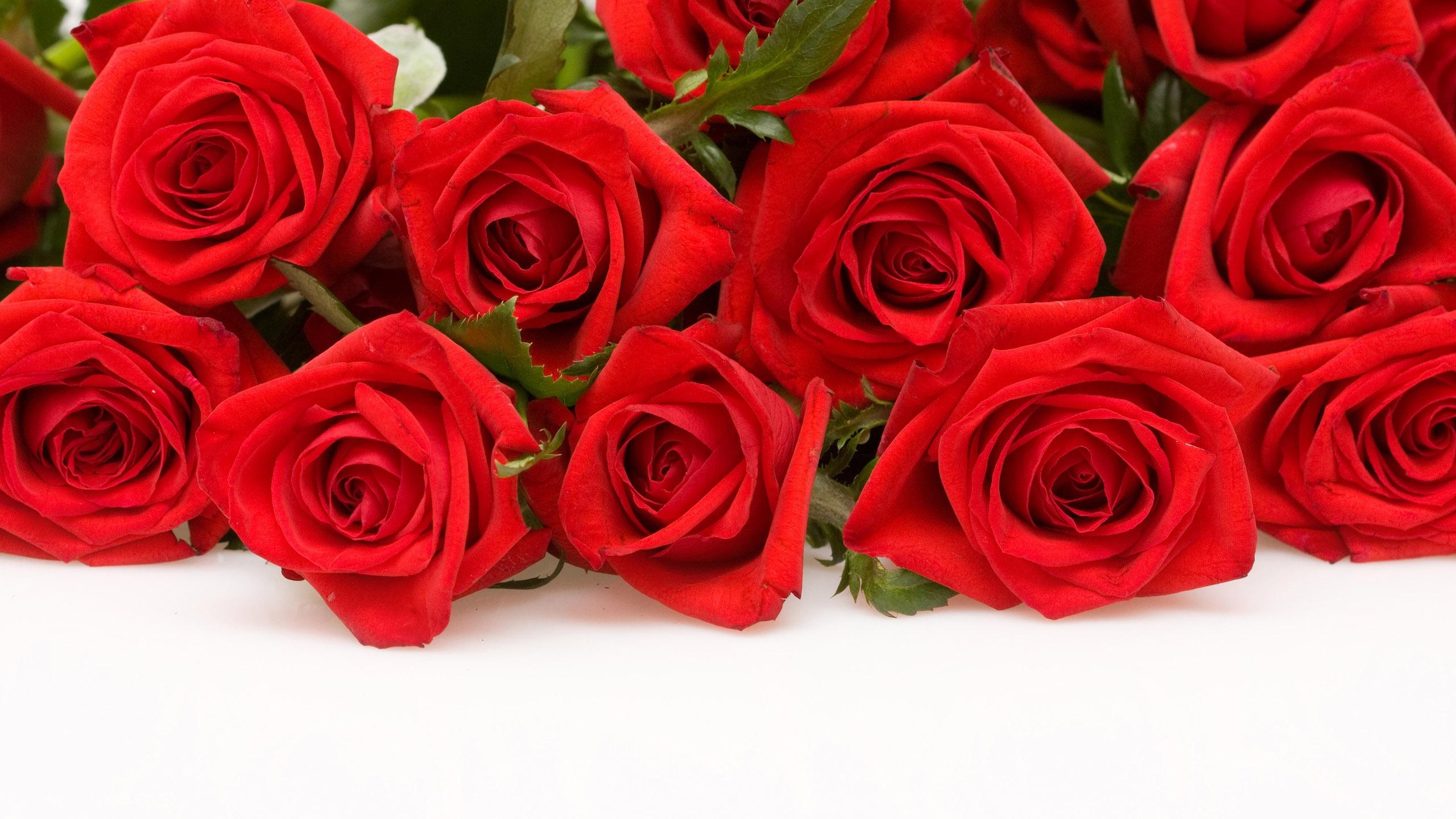 2560x1440 Red Roses desktop PC and Mac wallpaper 2560x1440