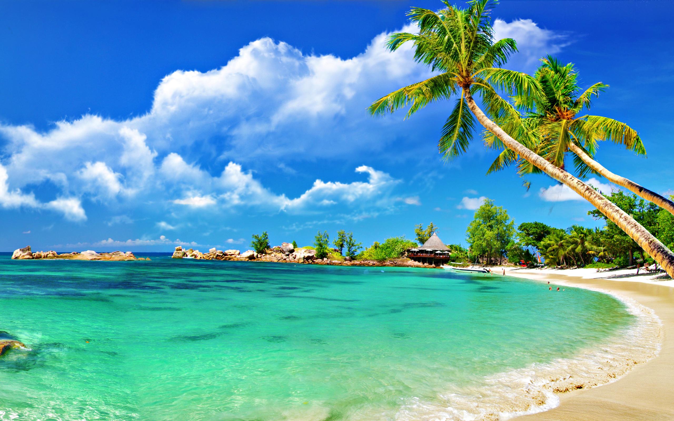 Palm trees on sandy beach wallpaper   1076658 2560x1600
