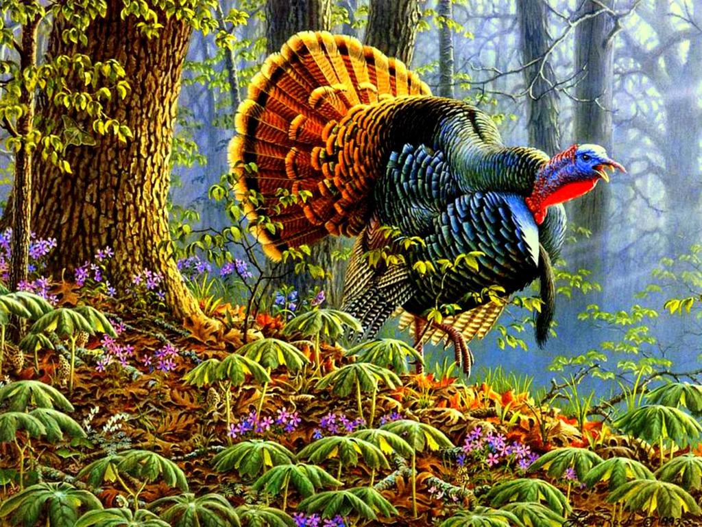 Free Eastern Wild Turkey Wallpaper Wallpapersafari