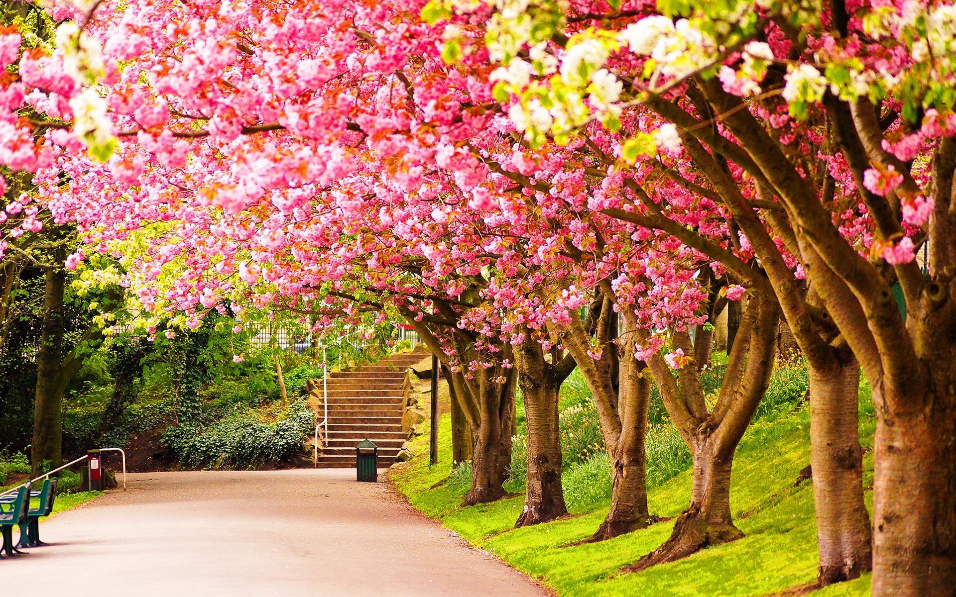 Spring background wallpaper   SF Wallpaper 1920x1200