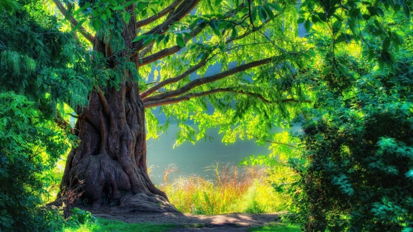Nature HD Wallpapers 1080p Widescreen - WallpaperSafari