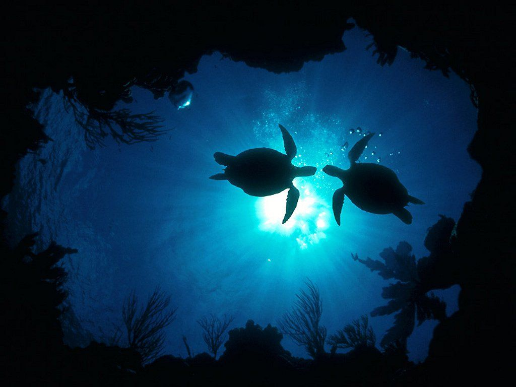 under ocean images   Saferbrowser Yahoo Image Search Results 1024x768