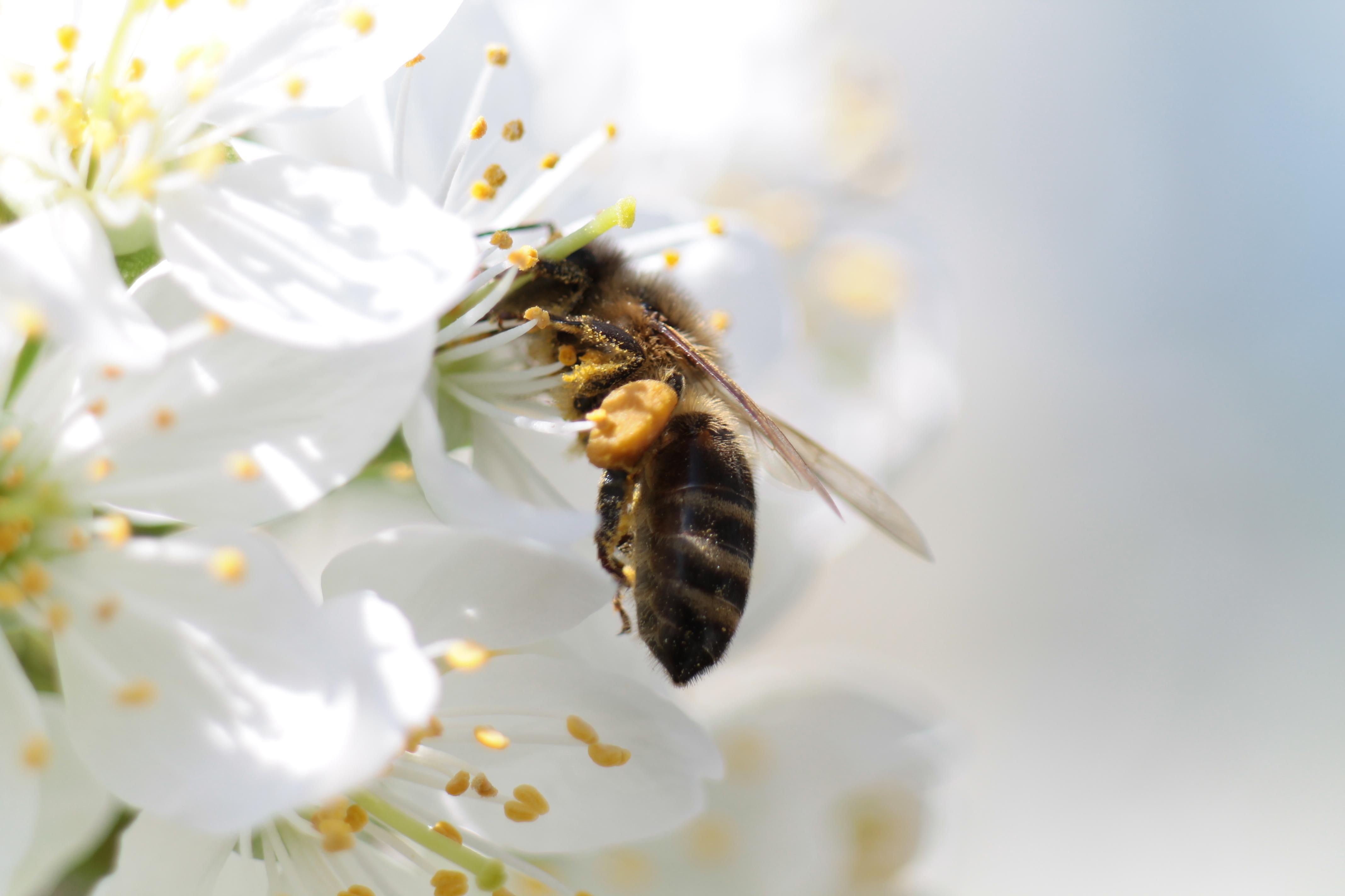 Bee Wallpapers Download   47 Nice Wallpapers 4272x2848