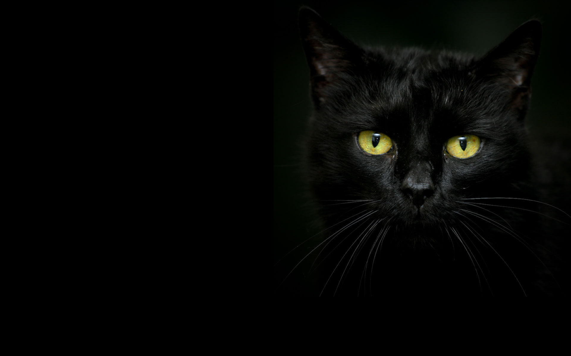 Beautiful black cat on a dark background wallpapers and images 1920x1200