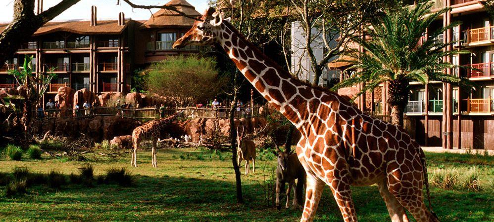 an analysis of the animal kingdom a disney park