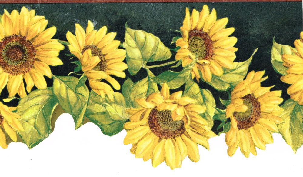 46 Sunflower Wallpaper Borders On Wallpapersafari