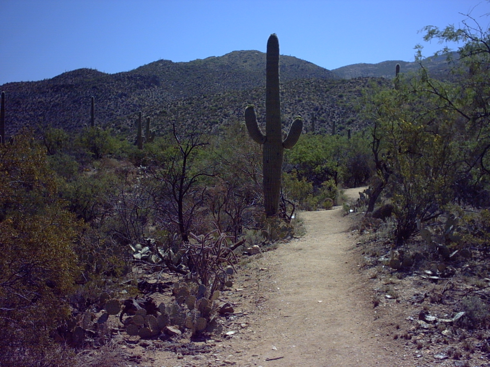 Hikes Trails at the Park   Friends of Saguaro National Park 1600x1200