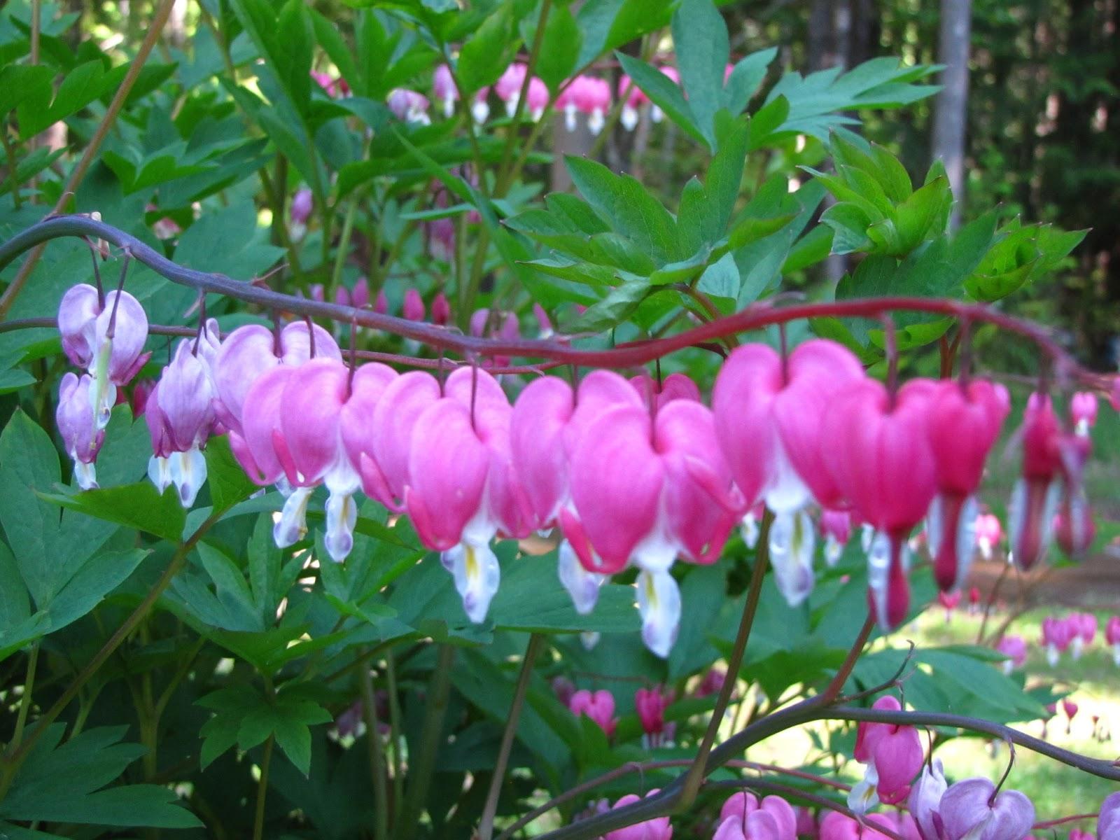 April Flowers Wallpaper Wallpapersafari