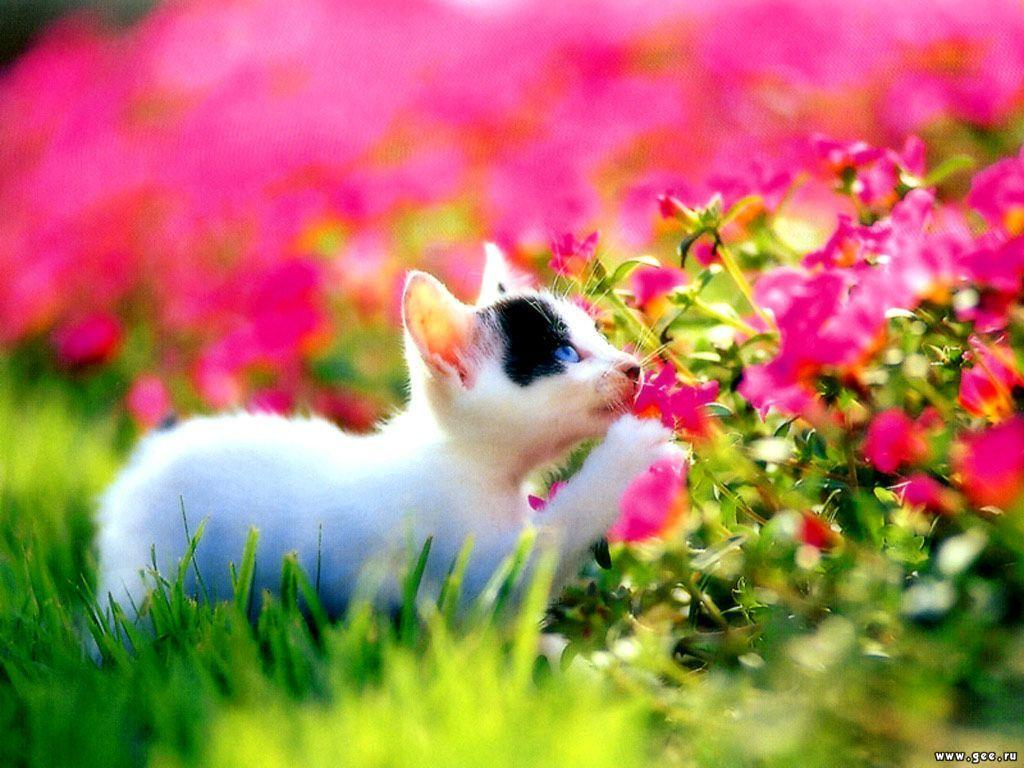 Cute Cat in Garden Flower Wallpaper Wallpaper ME 1024x768