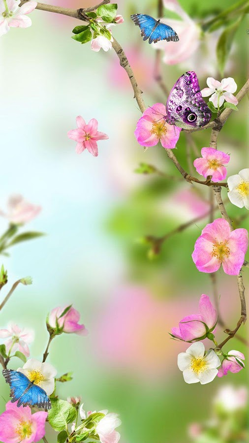 Flowers Live Wallpaper Android 506x900