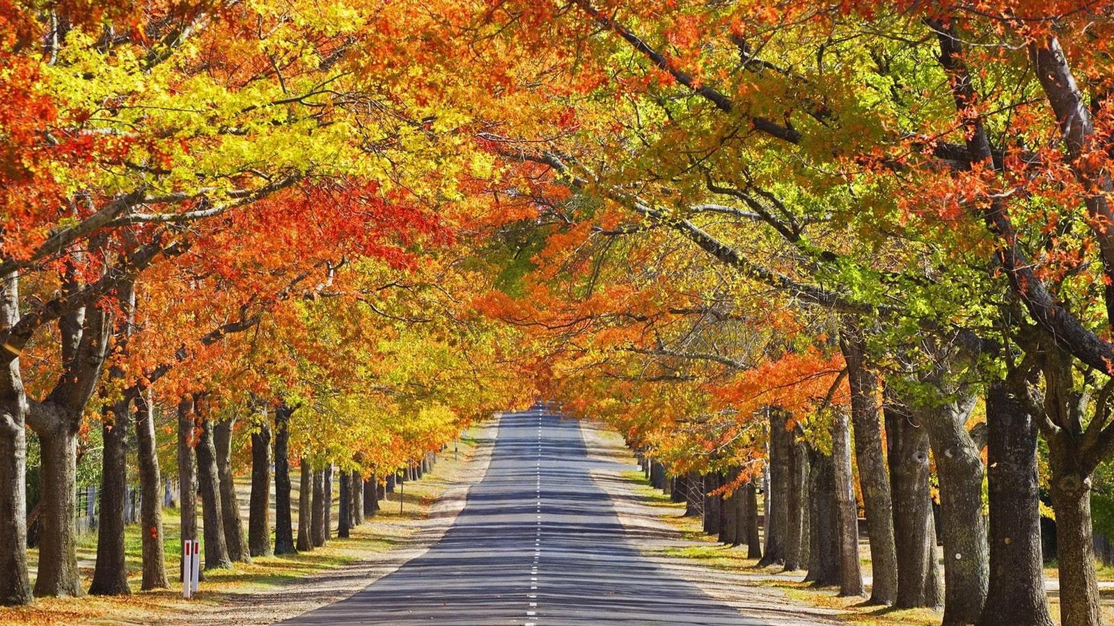Fall Season Wallpaper for Desktop Desktop Image 1600x900