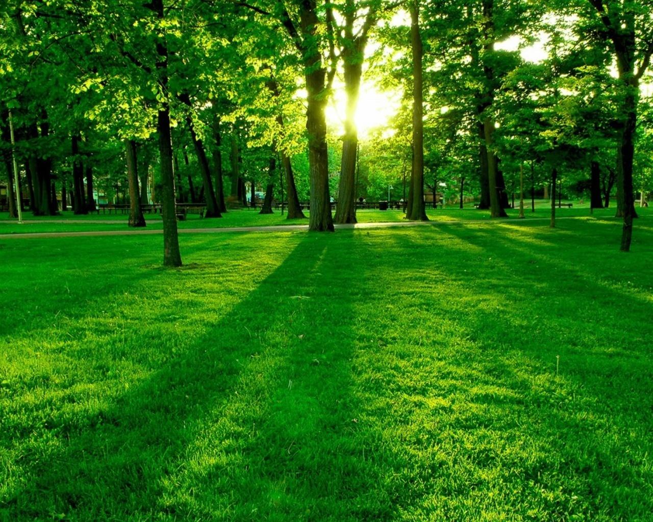 Forest Green Background Wallpaper HD Wallpaper 1280x1024