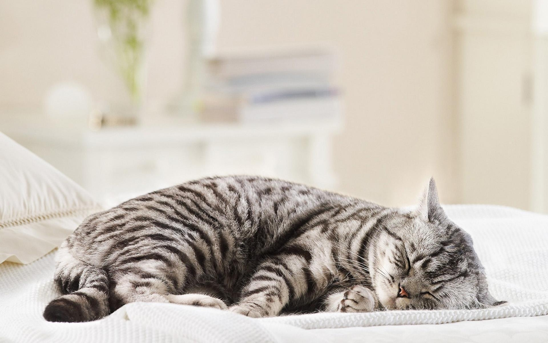 Sleeping Cat Wallpaper 40312 1920x1200px 1920x1200