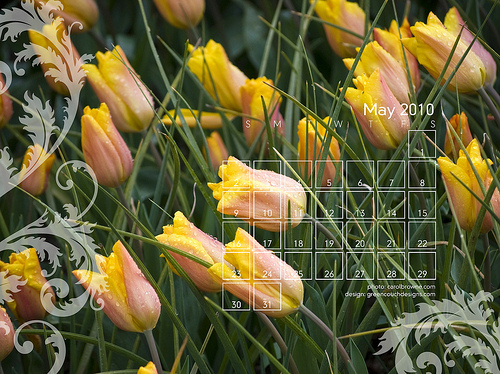 Wallpapers for the month of May Photo by me carolbr 500x374