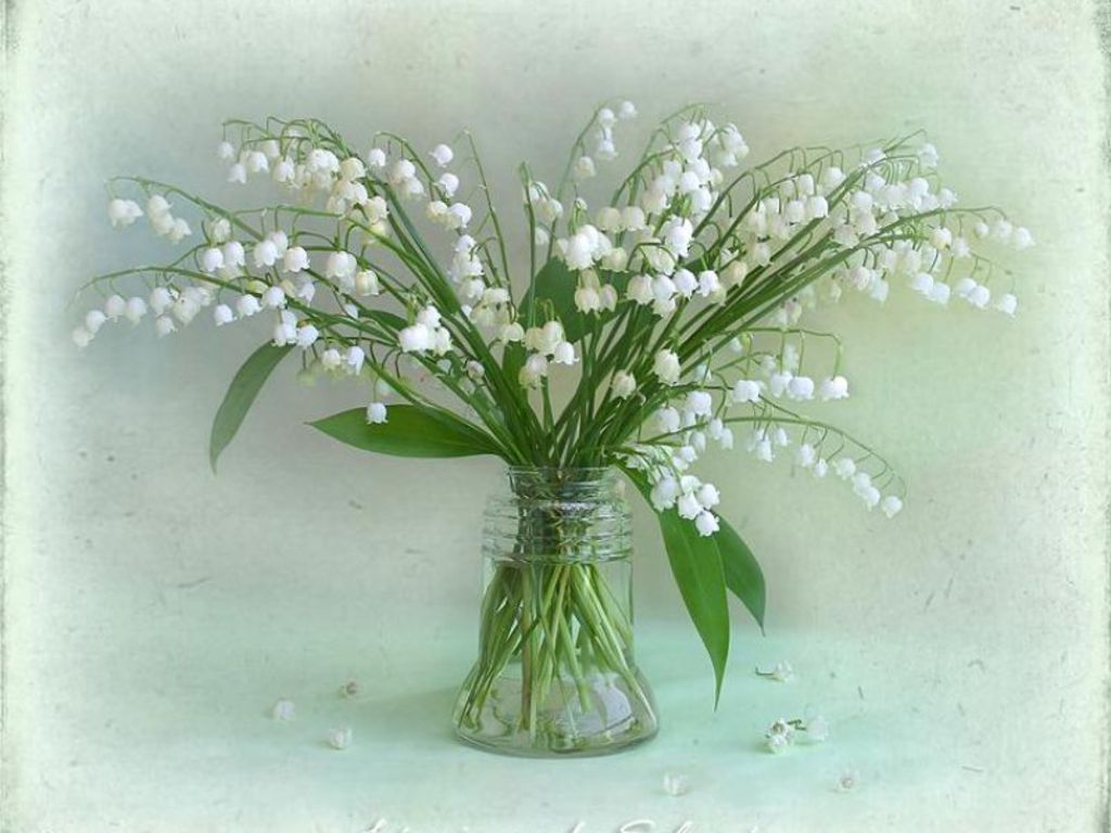 Free Download Lily Of The Valley For Katica Crozg Wallpaper