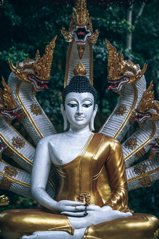 Macro Shot Photography Of Gautama Buddha Figurine   Stock 4000x6000