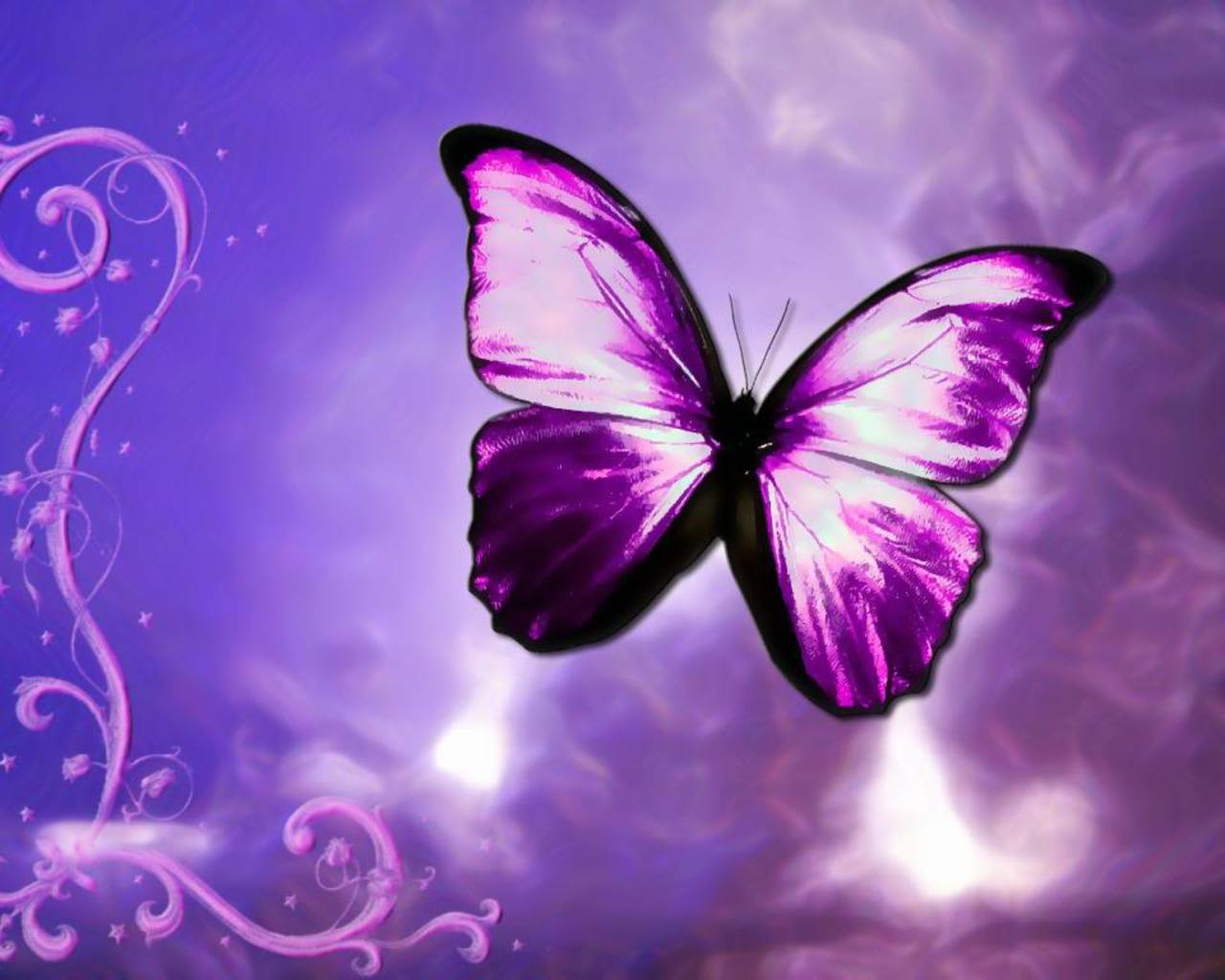 Purple Butterfly Wallpapers Picture at Abstract Monodomo 1280x1024