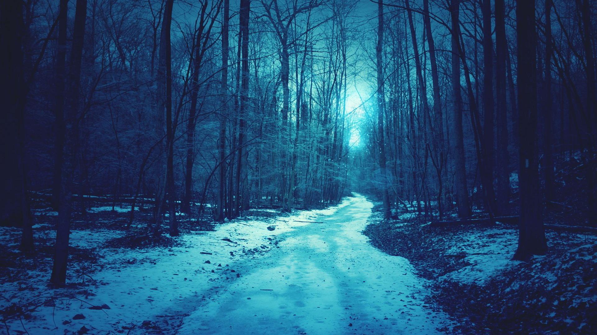 backgrounds winter shallow blue background forest snow desktop 1920x1080