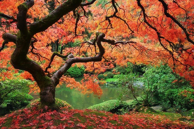 Just Cool Pics The Most Beautiful Trees Ever 800x533