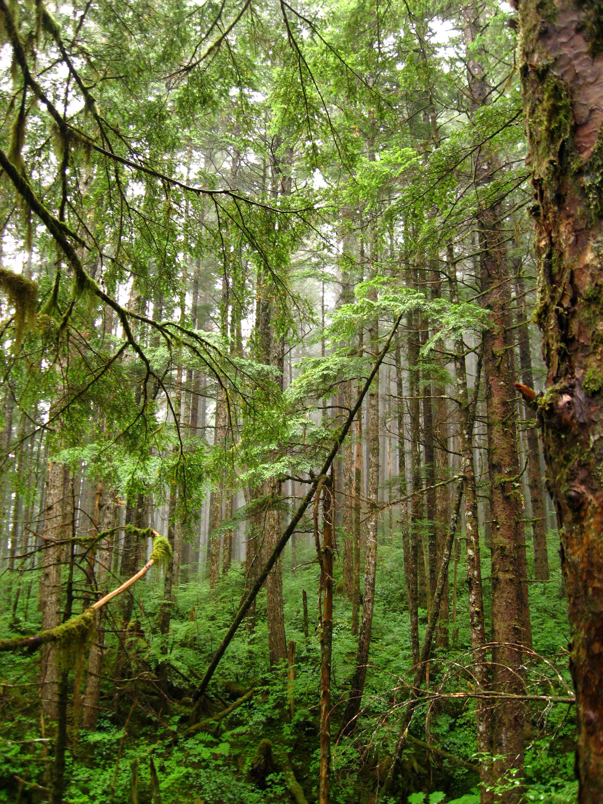 Alaska Rainforest Zipline Wallpaper HD Iphone 5 Wallpaper 2304x3072