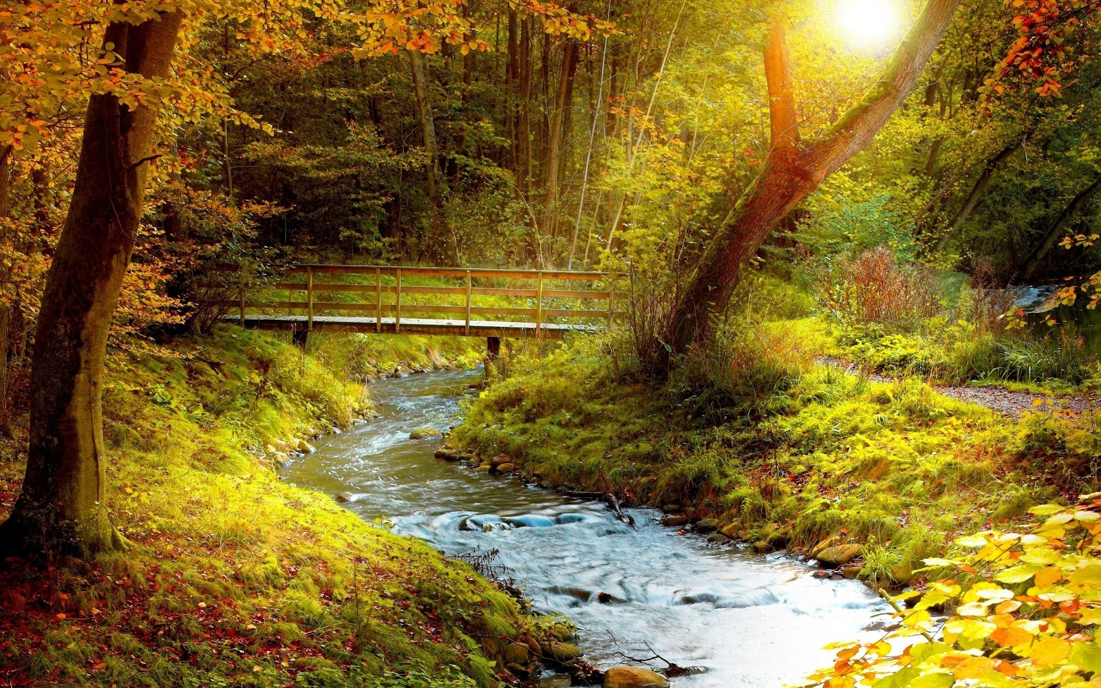 Windows 8 HD Desktop Wallpapers Forests and Woodlands Wallpapers 2 1600x1000