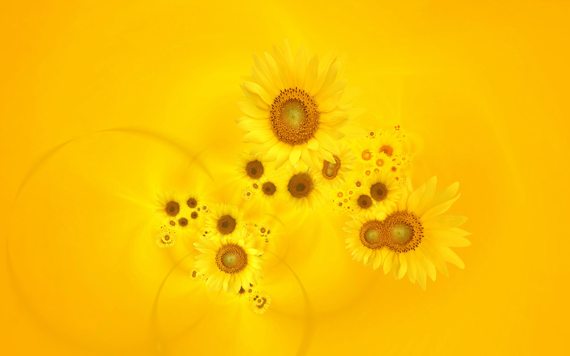 Bright Yellow Sunflowers Wallpapers HD Wallpapers 1920x1200