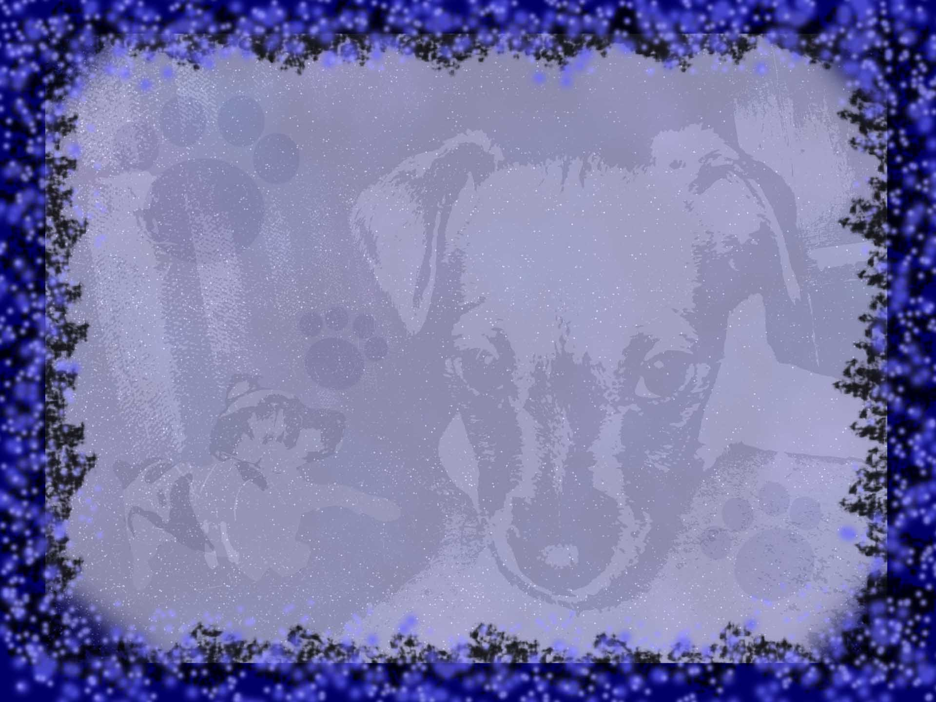Puppy with Black and Blue Border desktop wallpaper WallpaperPixel 1920x1440