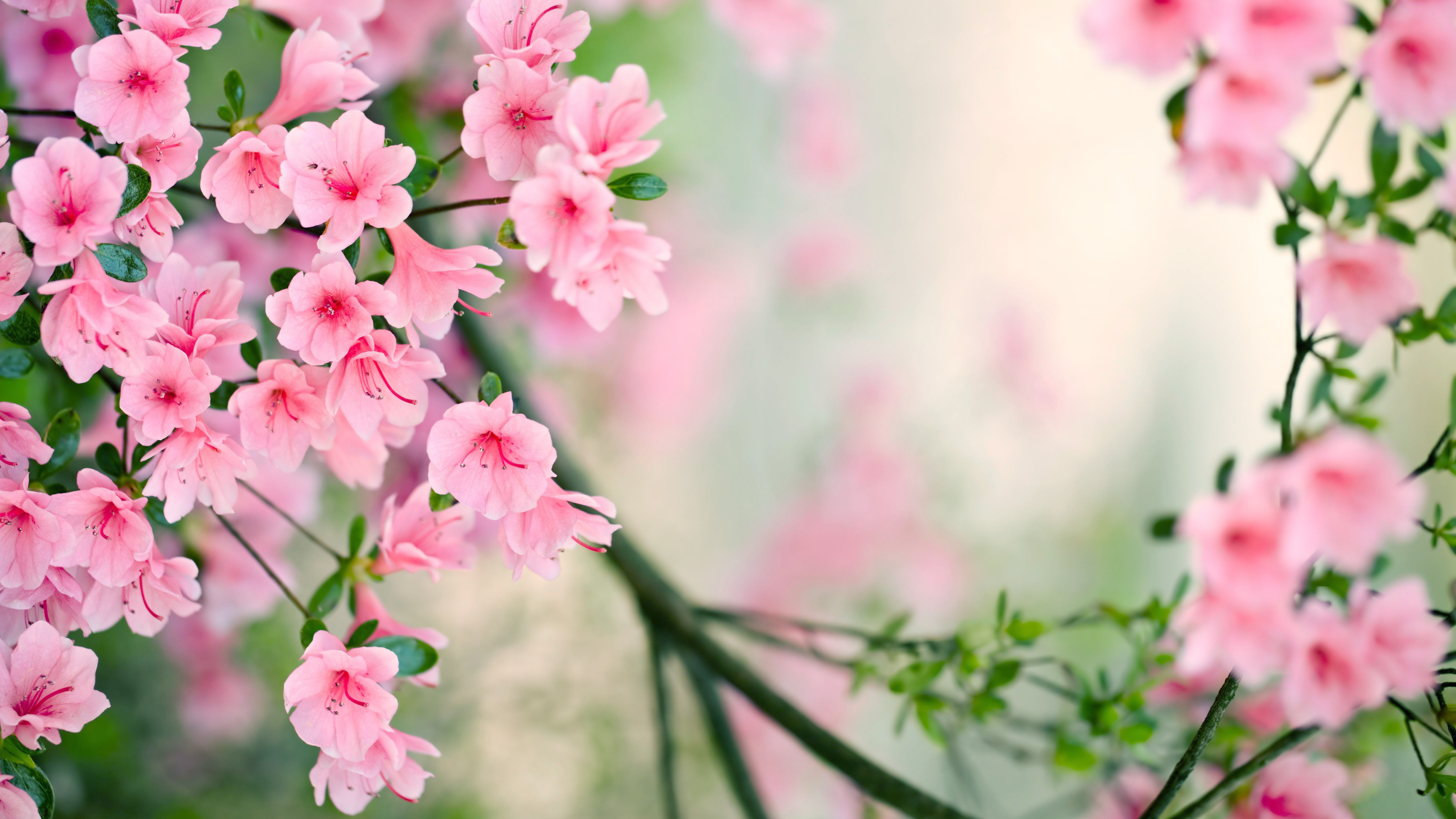 Nature Spring Desktop Wallpapers for Widescreen HD 5120x2880
