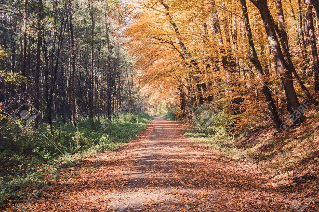 Trail In Autumn Forest Inspiration Autumn Nature Background Stock 1300x866