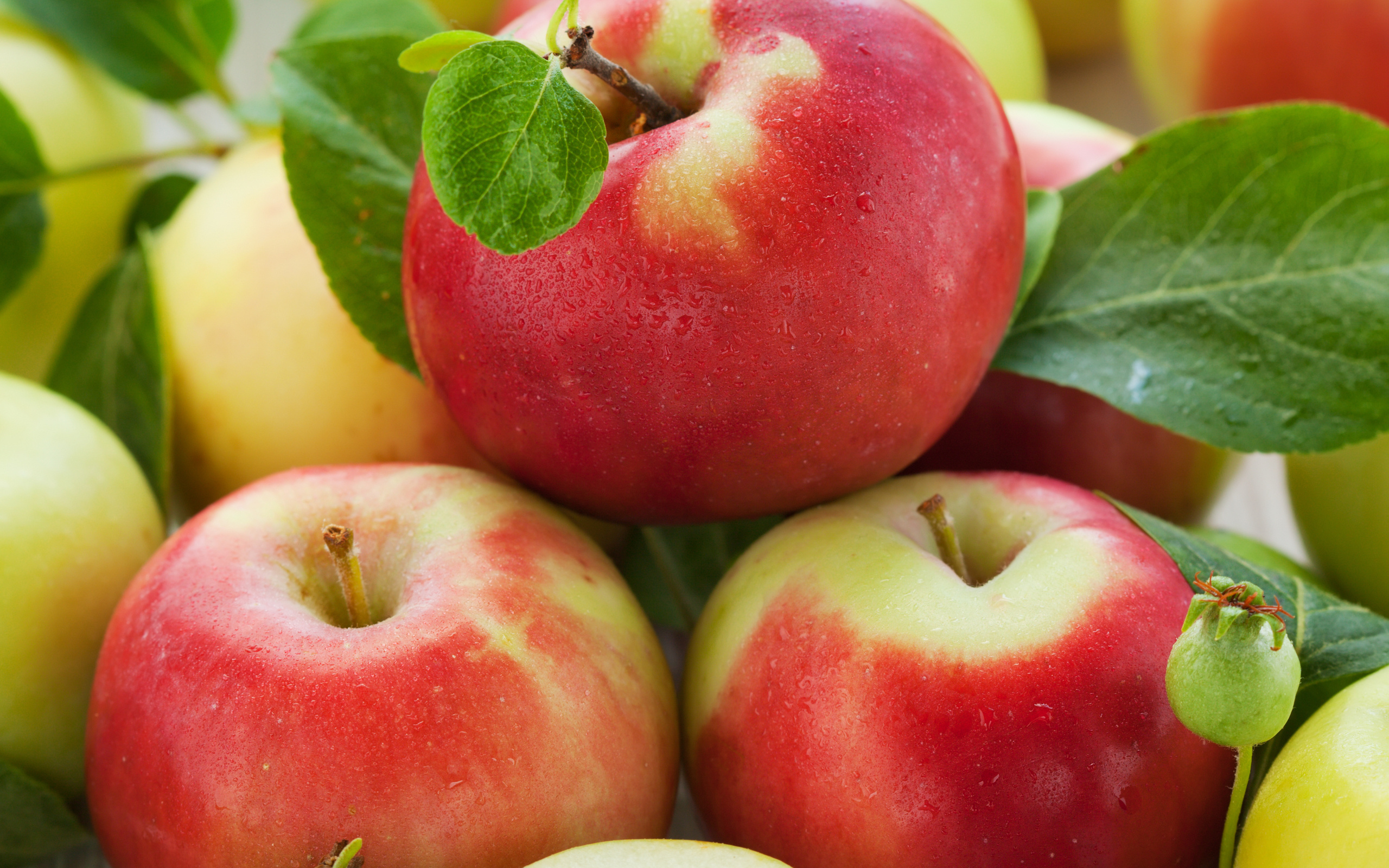 Ripe apples wallpapers and images   wallpapers pictures photos 2560x1600