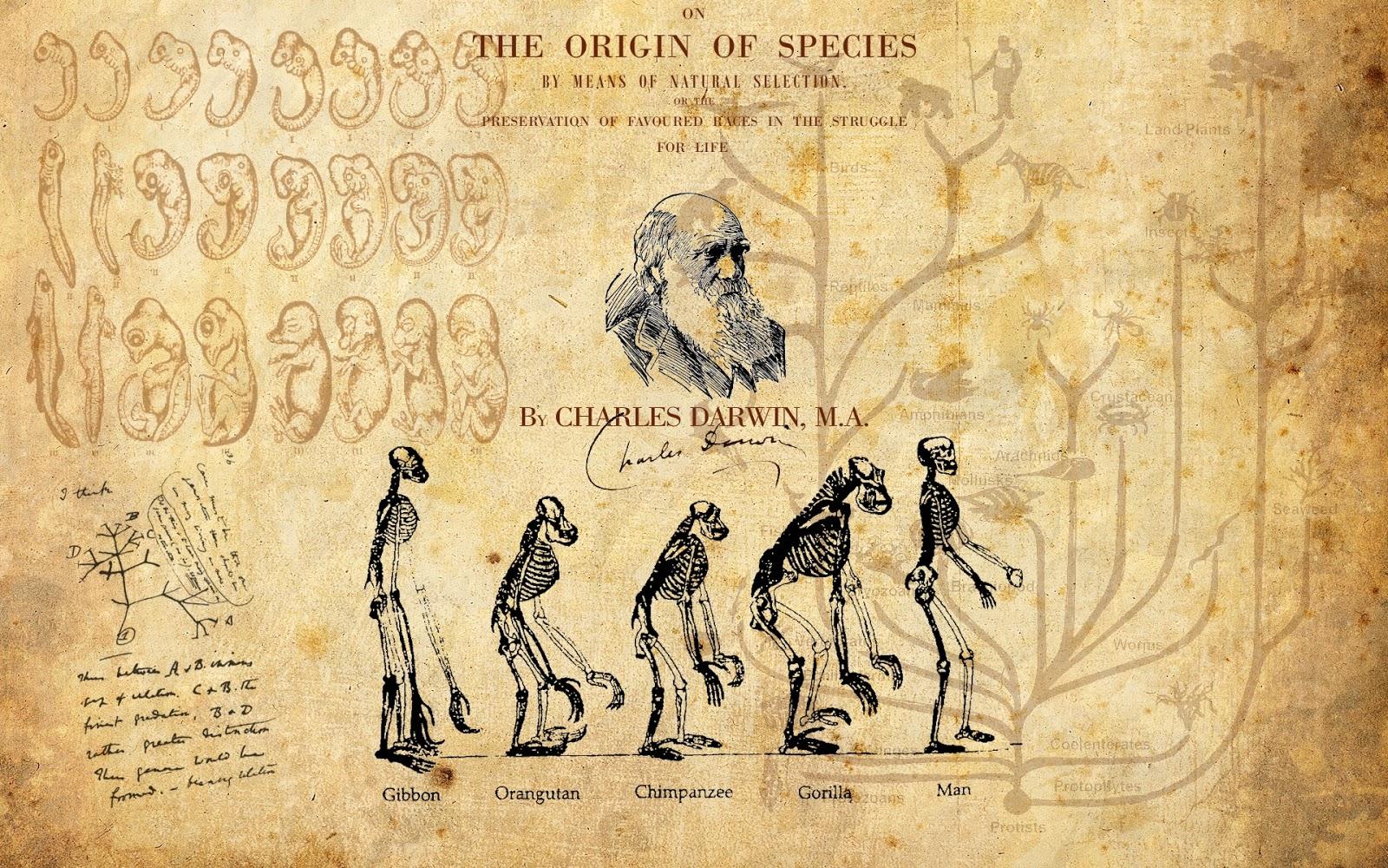 Best 52 Charles Darwin Wallpaper on HipWallpaper Attitude 1600x1000